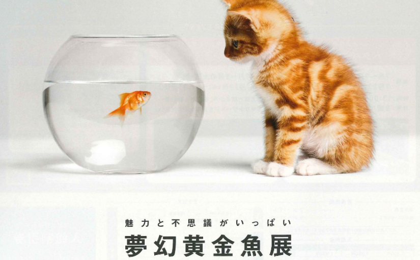 マリンワールド「夢幻黄金魚展」開催中!!